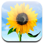 How to use photos ipad